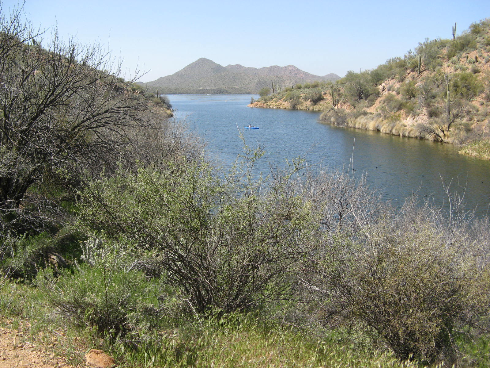 Butcher jones hike ideal for wildlife and wildflowers for Saguaro lake fishing