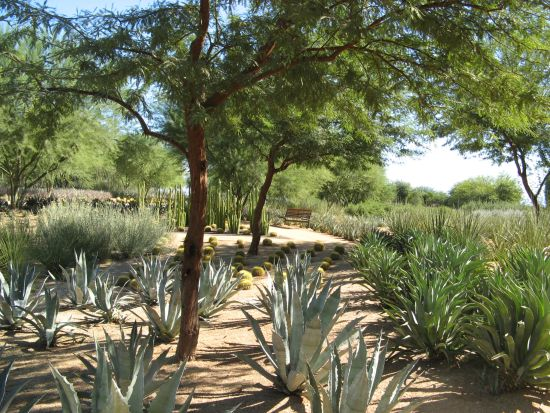Slow down the pace at Sunnylands gardens
