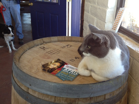 Vino the cat welcomes wine tasters to Arizona Hops and Vines
